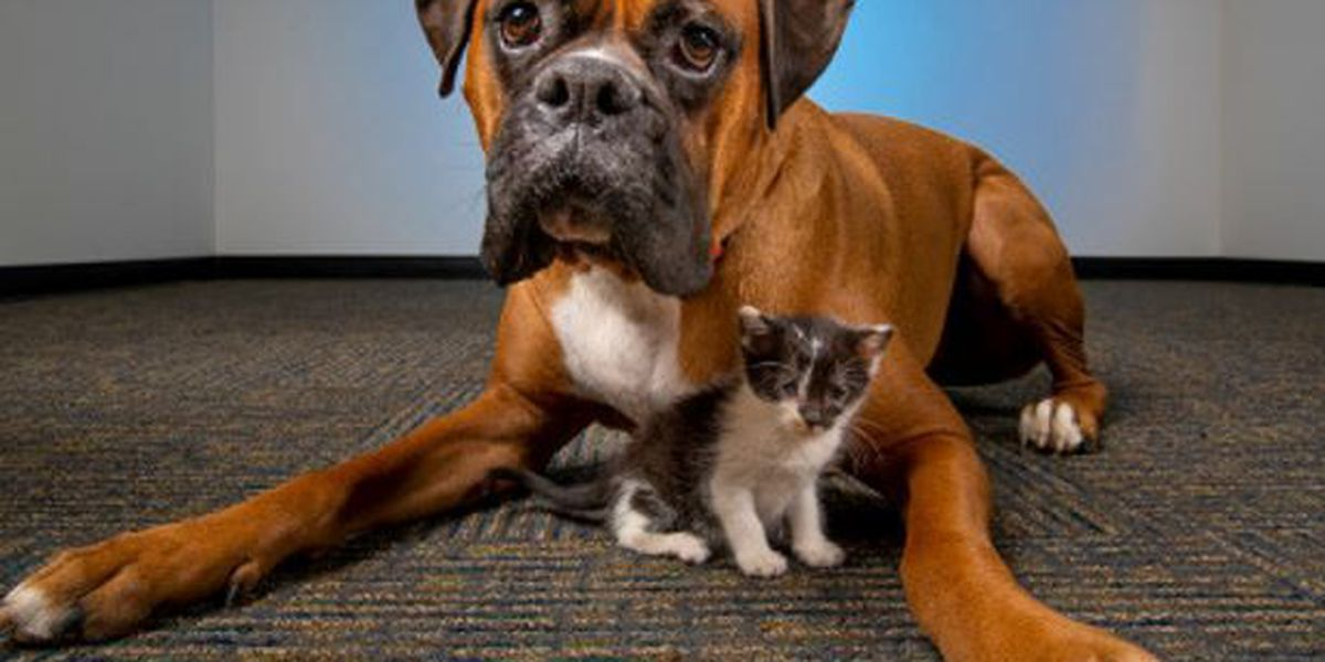 PACC looking to community for temporary foster homes for large dogs