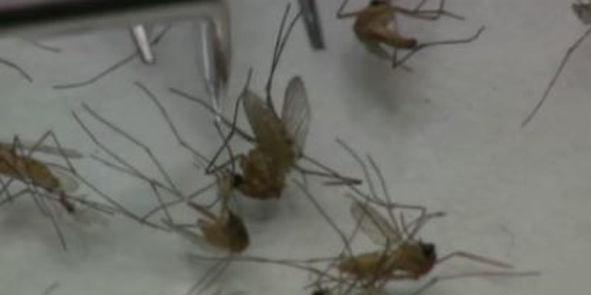 Monsoon storms means uptick in mosquitoes