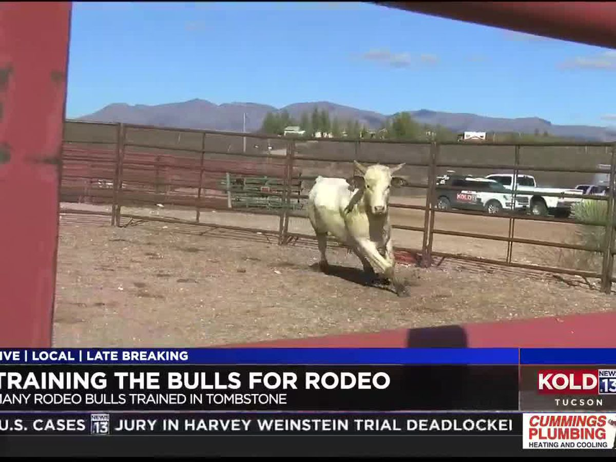 Tombstone trainer reveals what it takes to make a rodeo bull