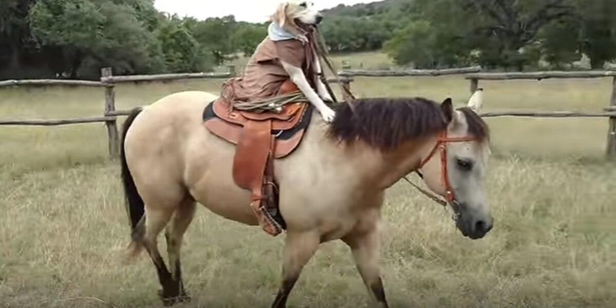 Esta canina de Texas le gusta montar el caballo