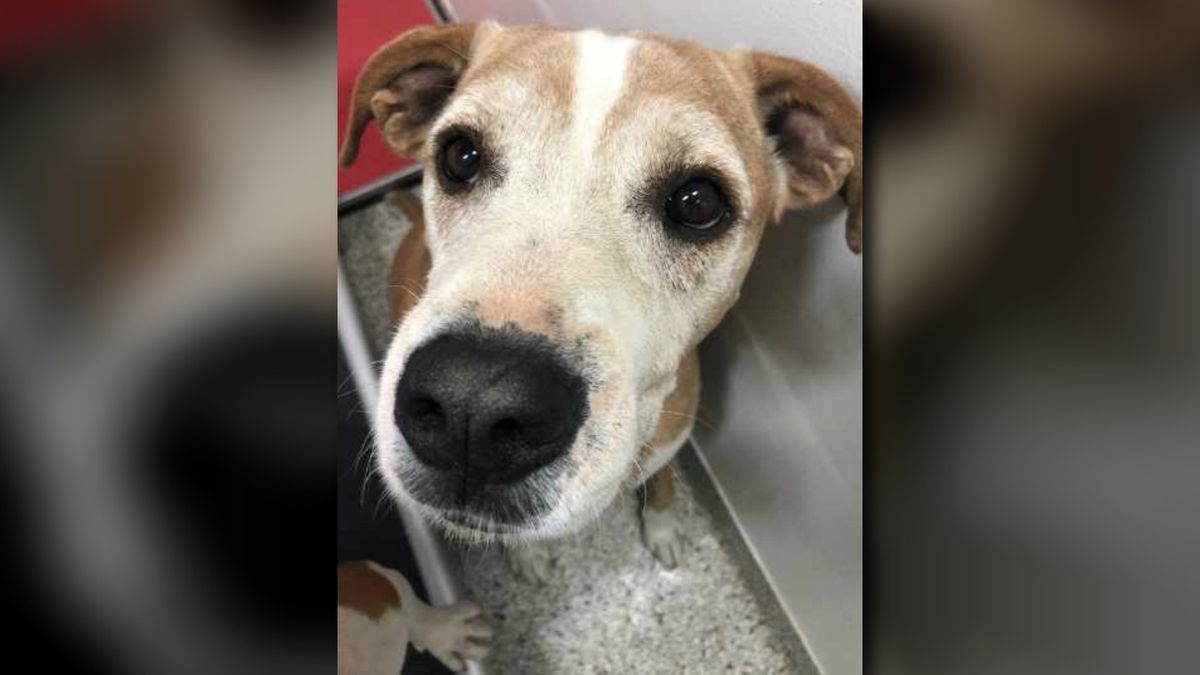 PACC looking to return lost dog to owner