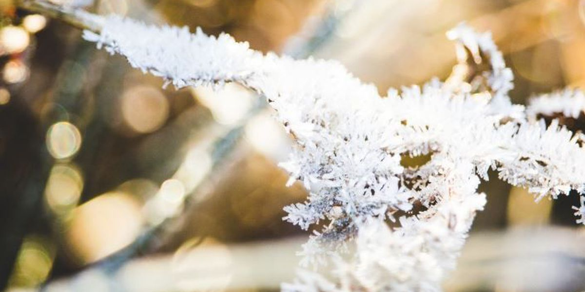 First frost of season has plant nurseries on alert