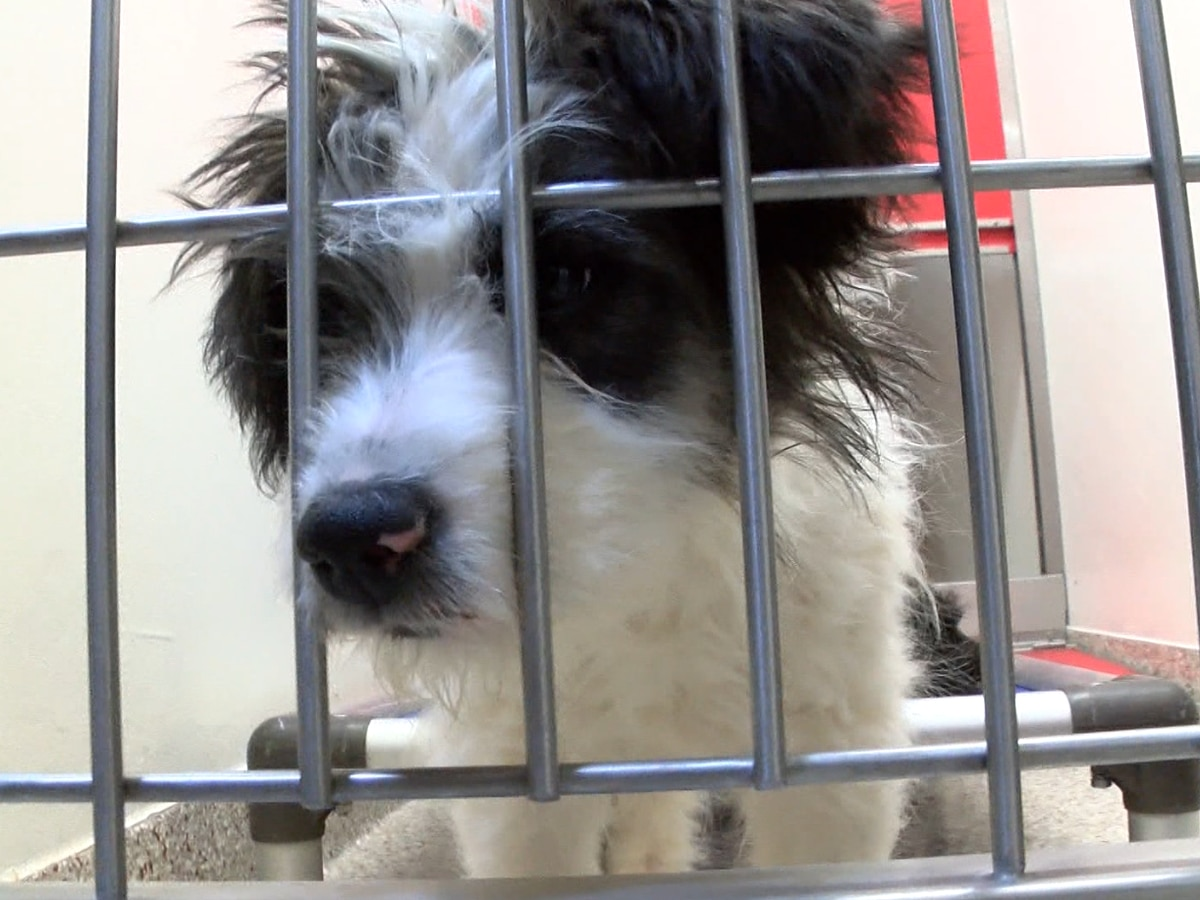 Pima Animal Care Center waives adoption fees for some pets