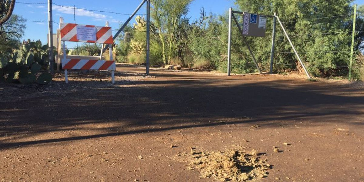 Horse riders cause costly damages to trail at Saguaro National Park