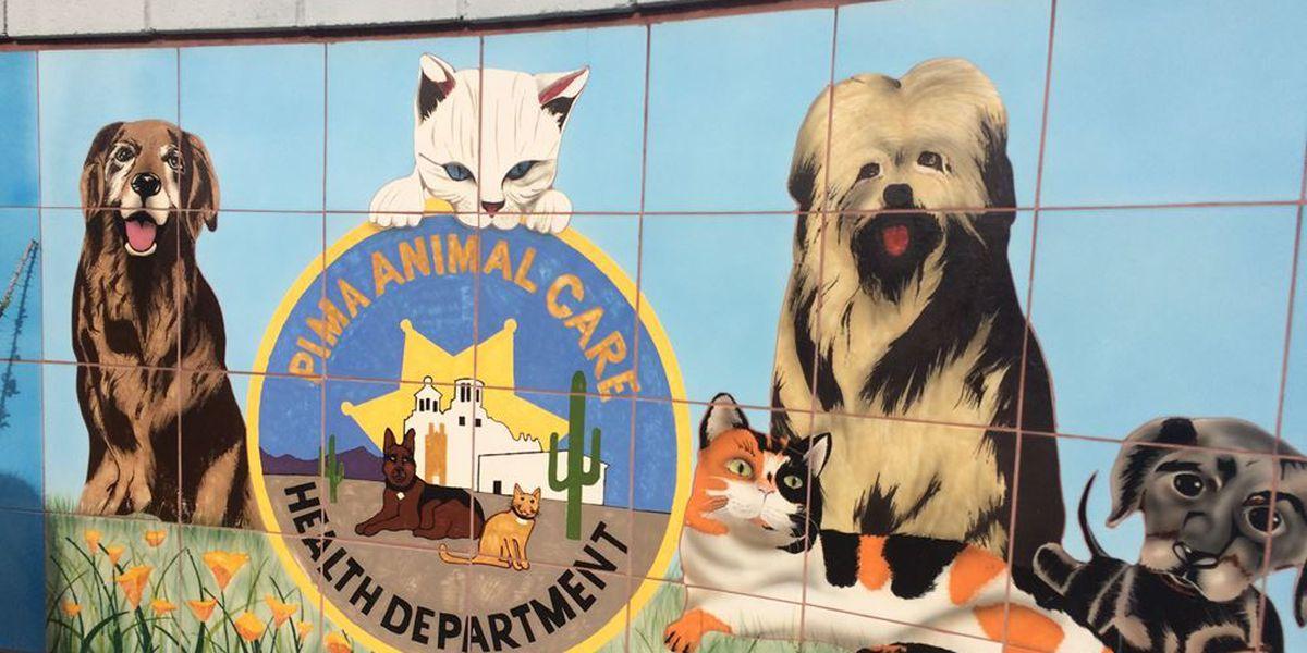 Centro de Cuidado para Animales de Pima (PACC) recibe reconocimiento nacional
