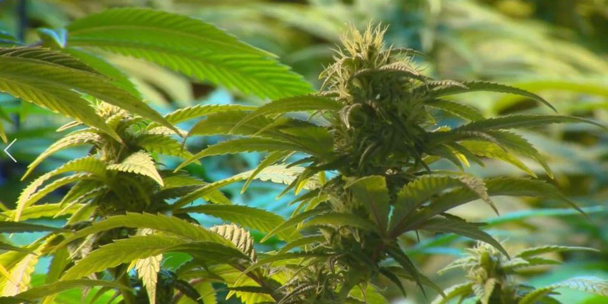 Sierra Vista City Council adopts recreational marijuana regulations
