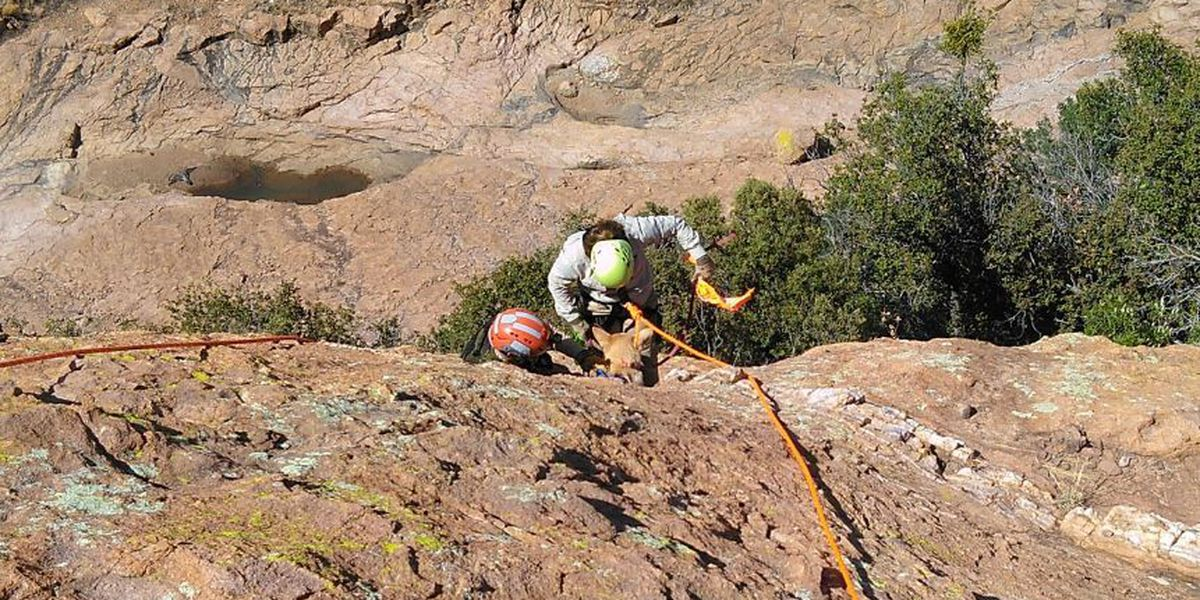 Cochise County rescuers rewarded with face licks