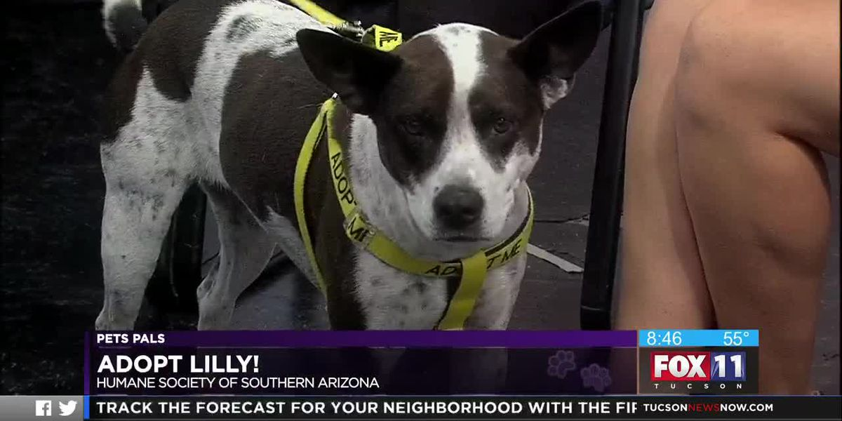 Pet Pals: Adopt Lilly