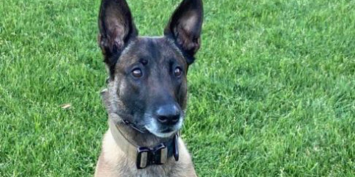 Officers fatally shoot armed man who wounded police K-9