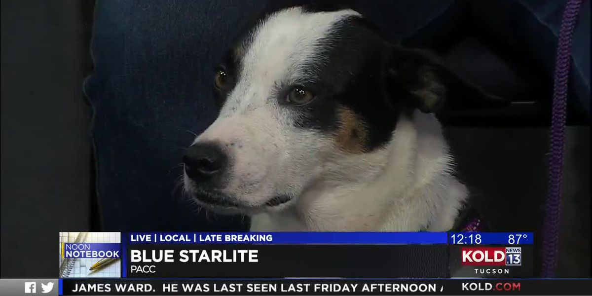 KOLD Noon Notebook: Adopt Blue Starlite