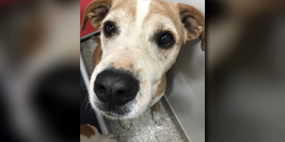 PACC looking to give dog a new home