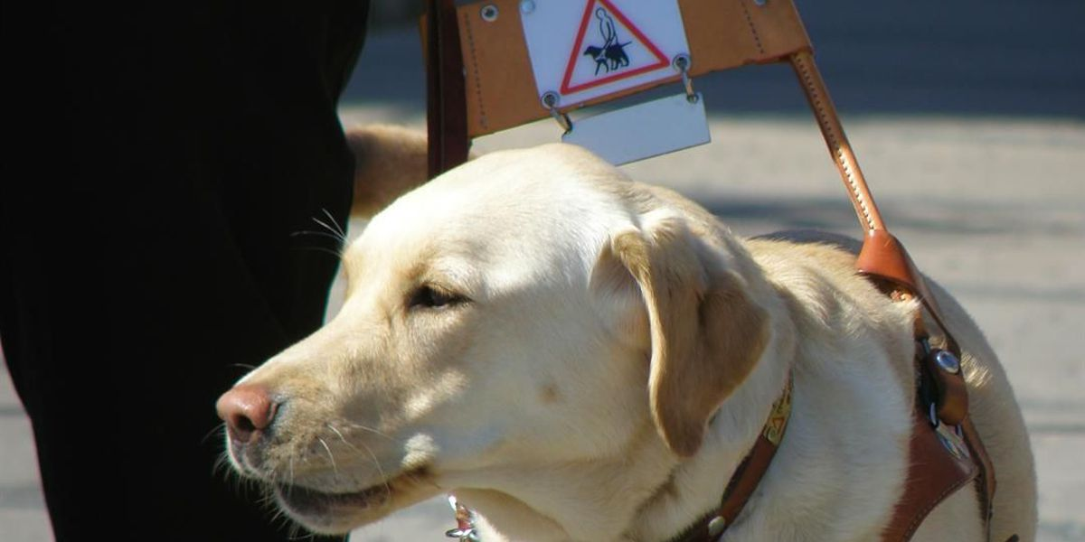 Fake service animals now illegal in Arizona