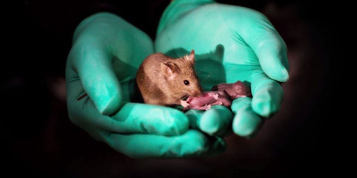 Scientists in China breed healthy mice from two females