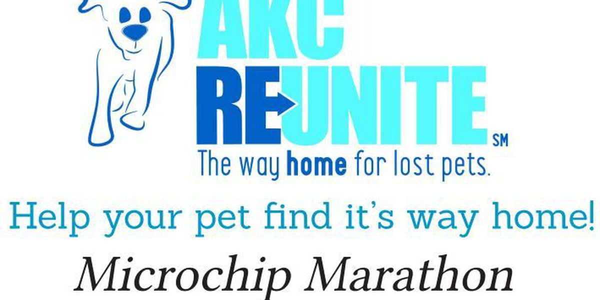 HAPPENING NOW: Tucson-area shelters participating in free Microchip Marathon