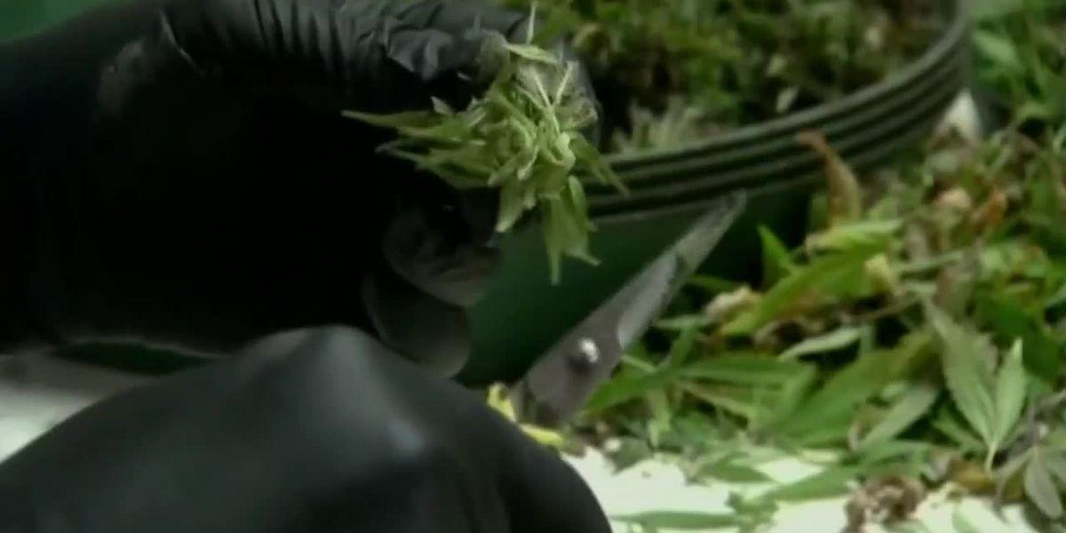 One Tucson dispensary begins recreational marijuana sales