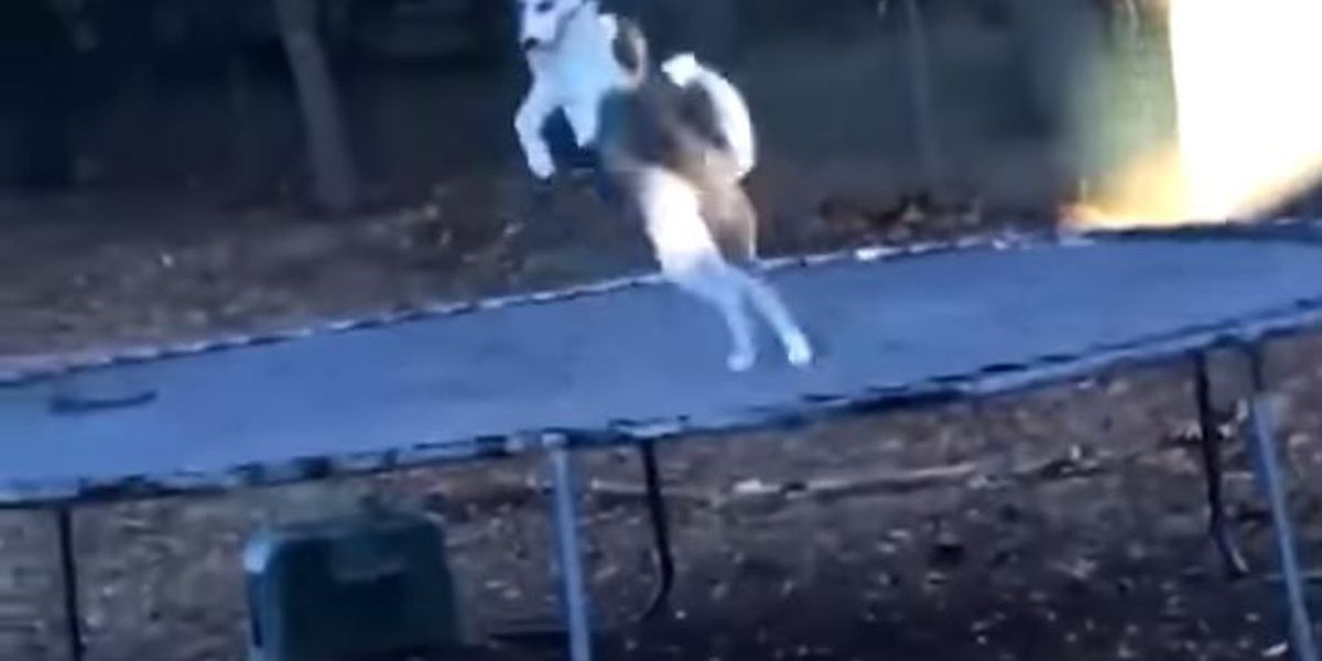 VIDEO: Husky prefers privacy when jumping on trampoline