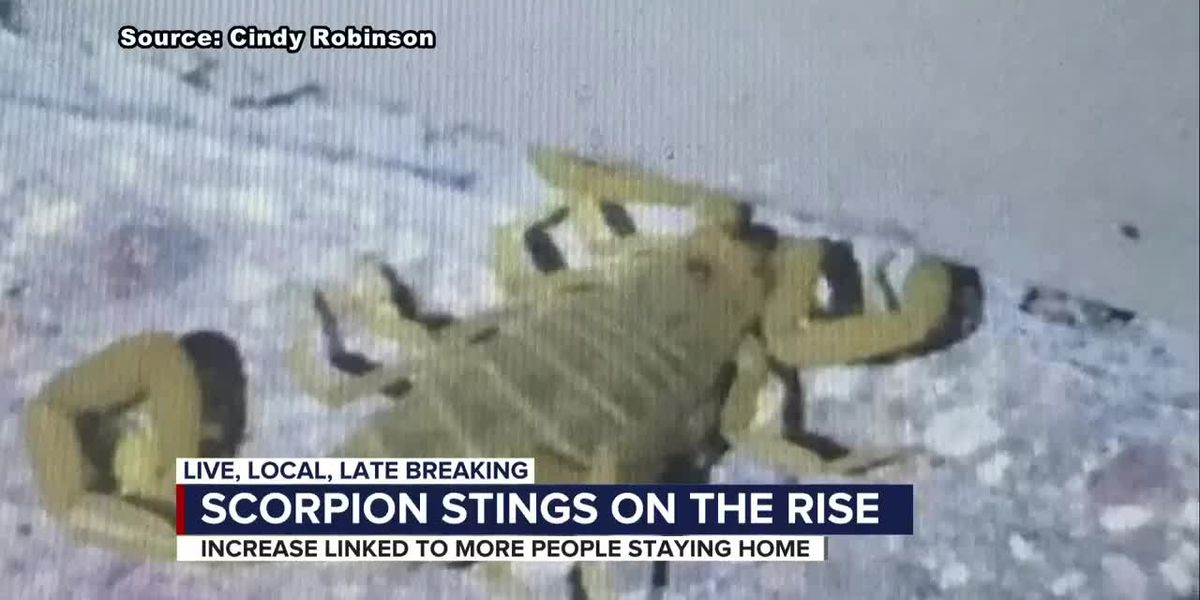Scorpion encounters on the rise with more people at home