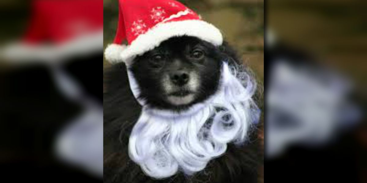 Tucson searching for dog cover model for holiday edition