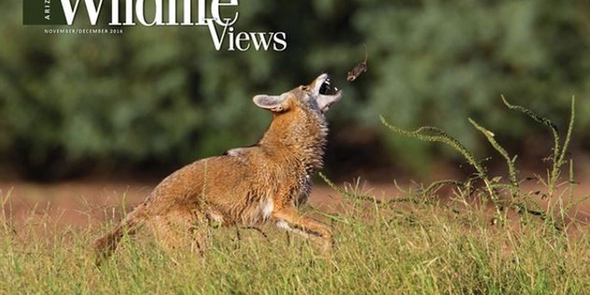 Three Tucson photographers place in wildlife photography contest