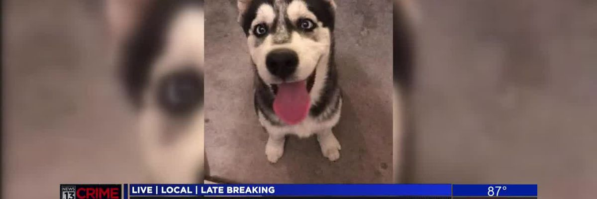 Dog stolen from Midvale Park Home