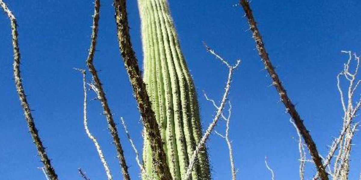 Celebrating 20 years of connecting Tucson youth to nature through photography
