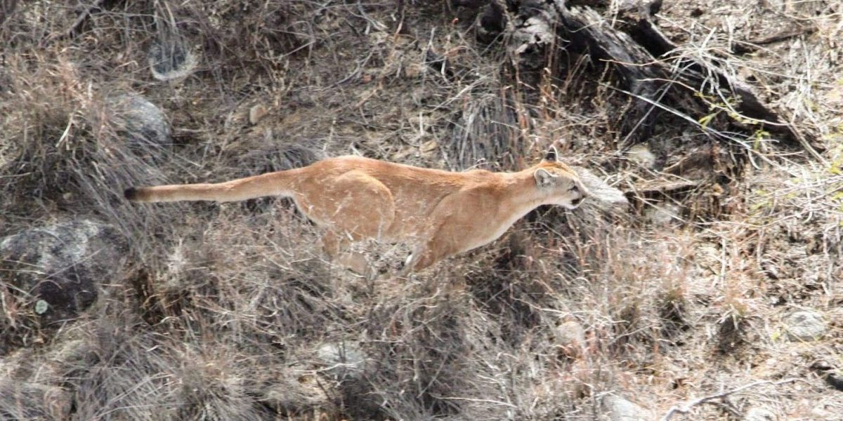 Arizona Game and Fish Department conducts aerial surveys of wildlife through end of Jan.
