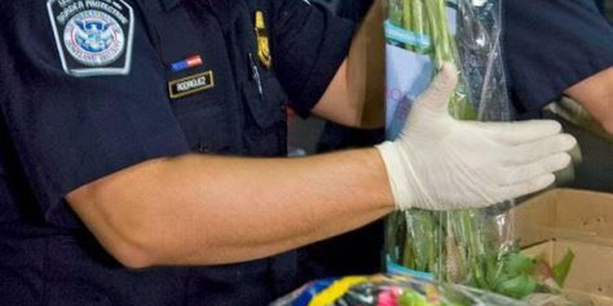 CBP Agriculture Specialists at Arizona Ports ensure Mother's Day flowers are disease, pest free