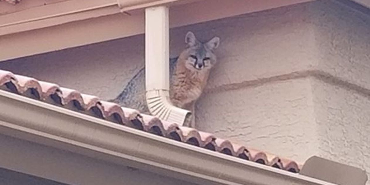 Unusual wildlife spotted on rooftop of Saddlebrooke home