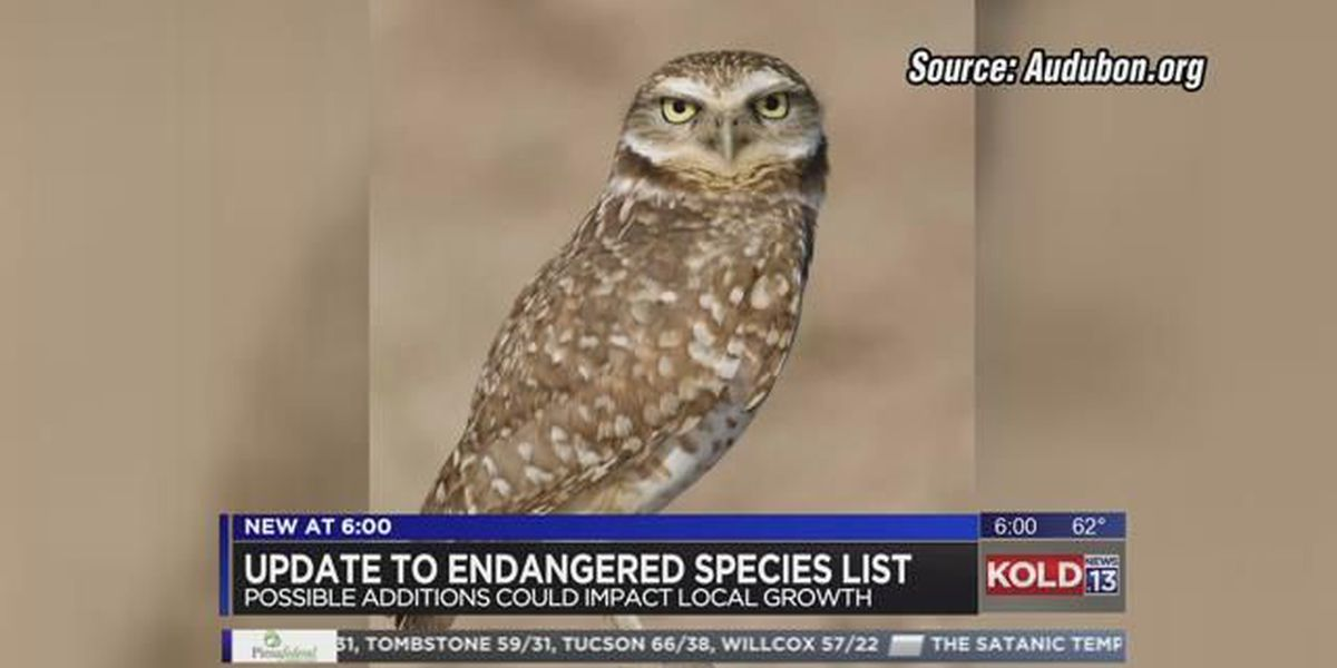 More endangered species could soon be added to list in Pima County