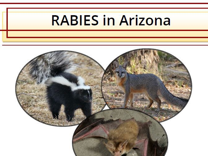 AZ Game and Fish warns as temperatures rise, so does the exposure to rabies