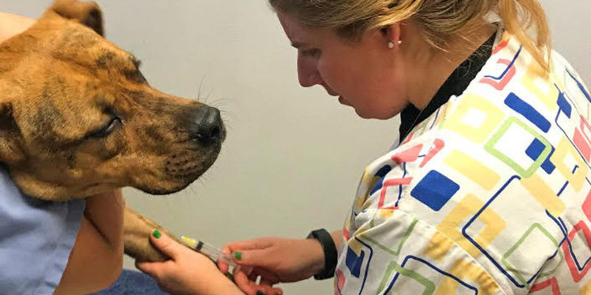 Arizona research institute testing cats, dogs for COVID-19