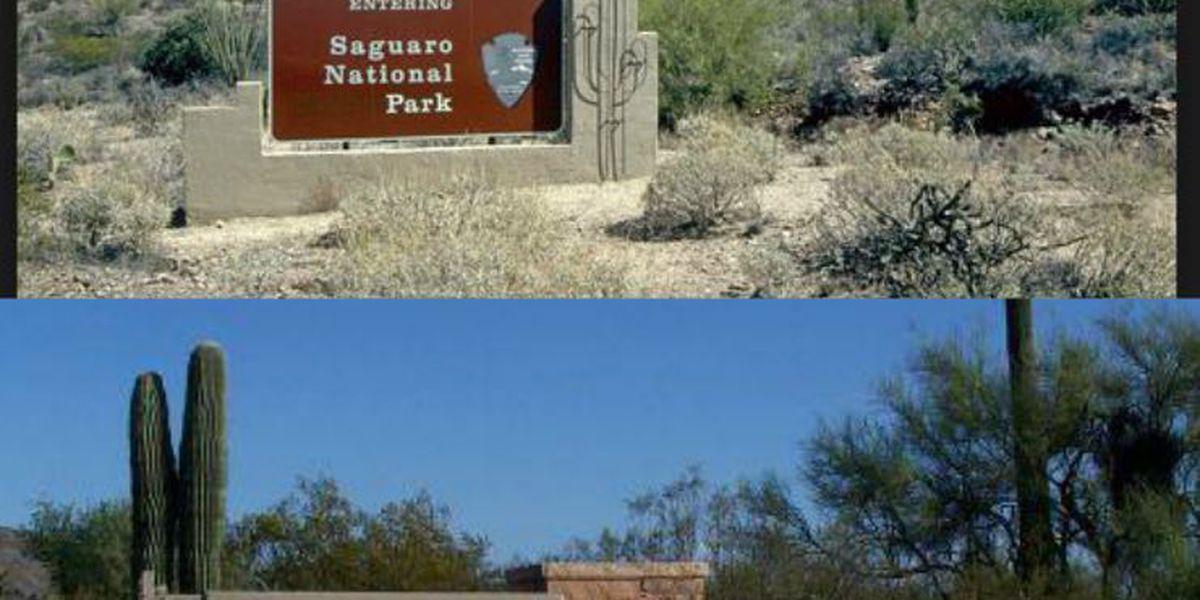 Saguaro National Park November, December schedule