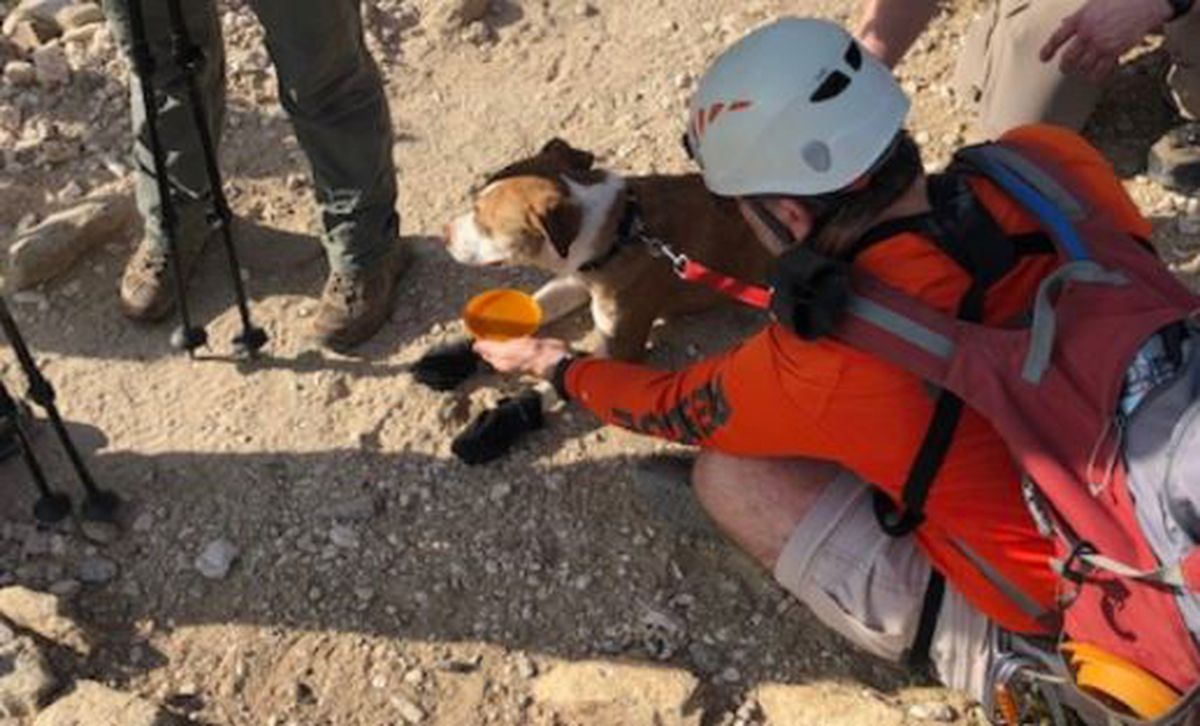 PCSD: Missing dog rescued from cliff near Sabino Canyon - KOLD