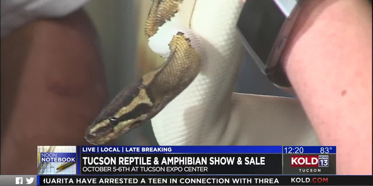 KOLD Noon Notebook: Reptile and Amphibian Show and Sale