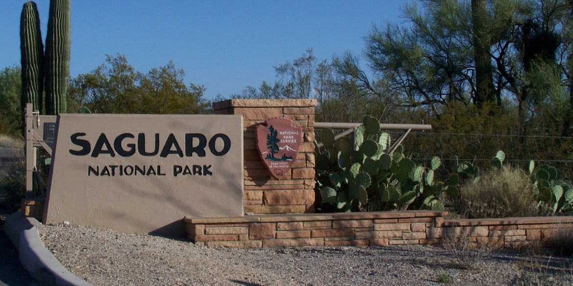 Authorities looking for owners of dog that bit boy at Saguaro National Park