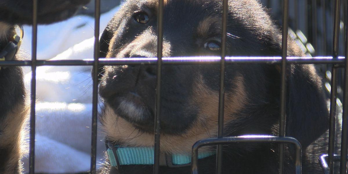 Nancy J. Brua Animal Care Center offers adoption special throughout March