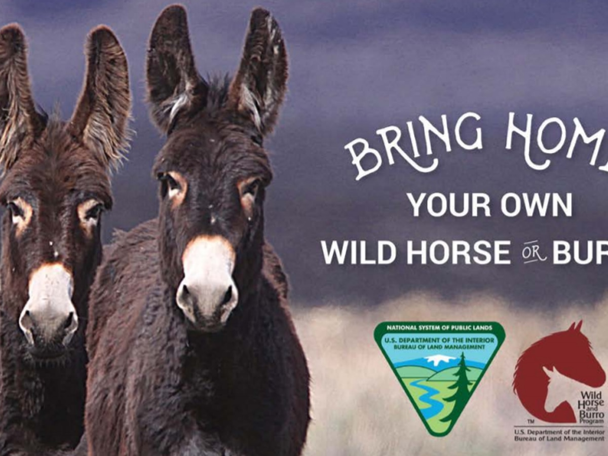 BLM hosts wild horse and burro adoption, sale January 24-26
