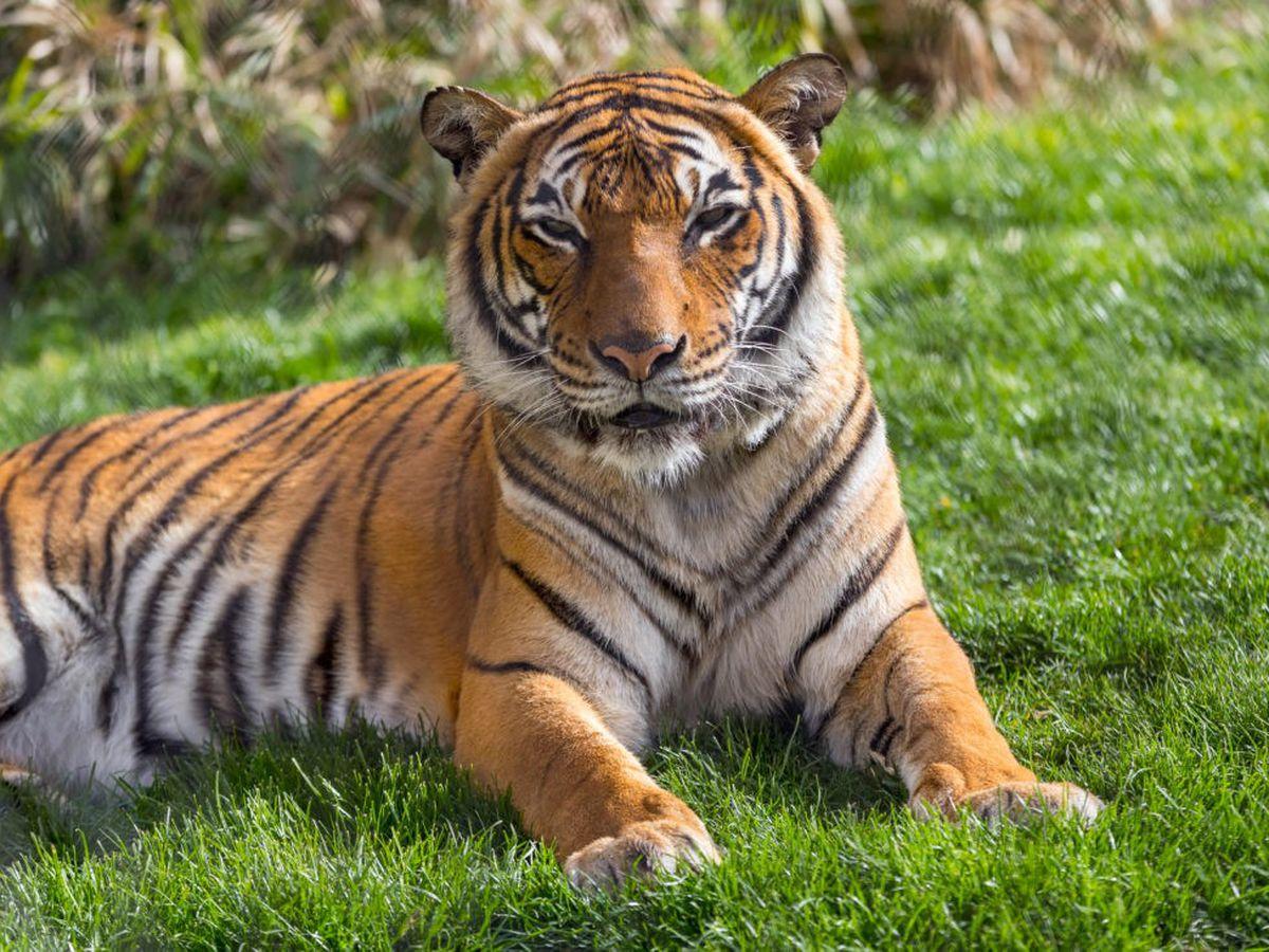 Reid Park Zoo says goodbye to 19-year-old Malayan tiger