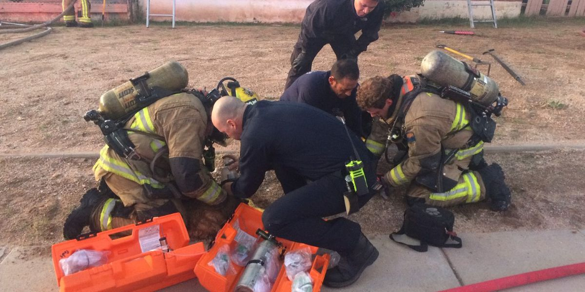 Tucson Fire rescues three dogs from west side home