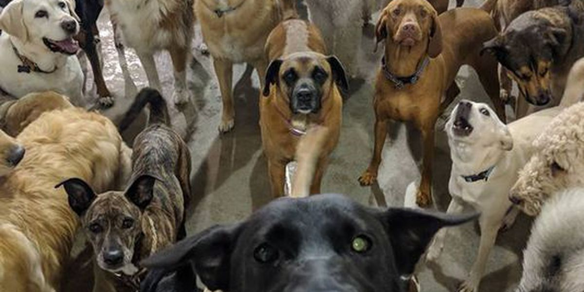 Pack of dogs take selfie while their owners are on vacation