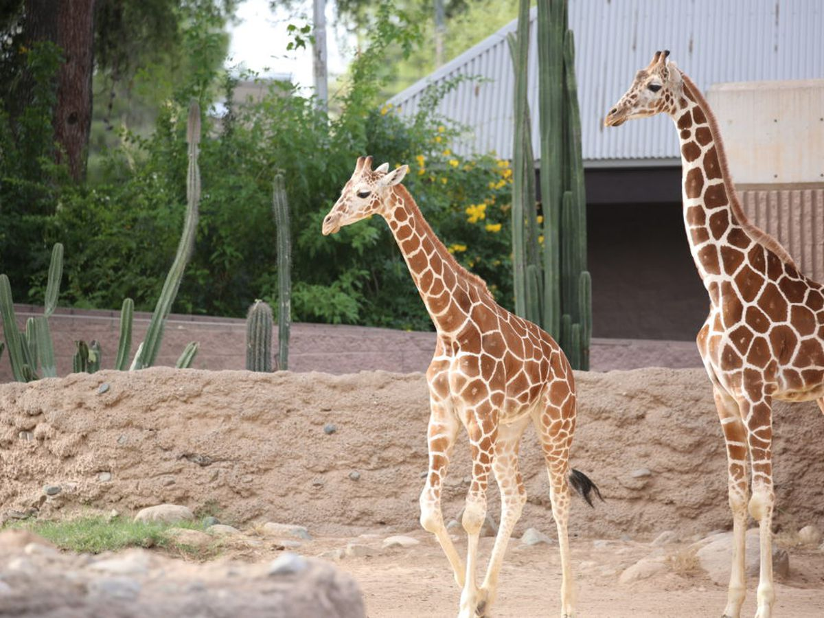Mayor Romero issues a statement on Reid Park Zoo expansion plans