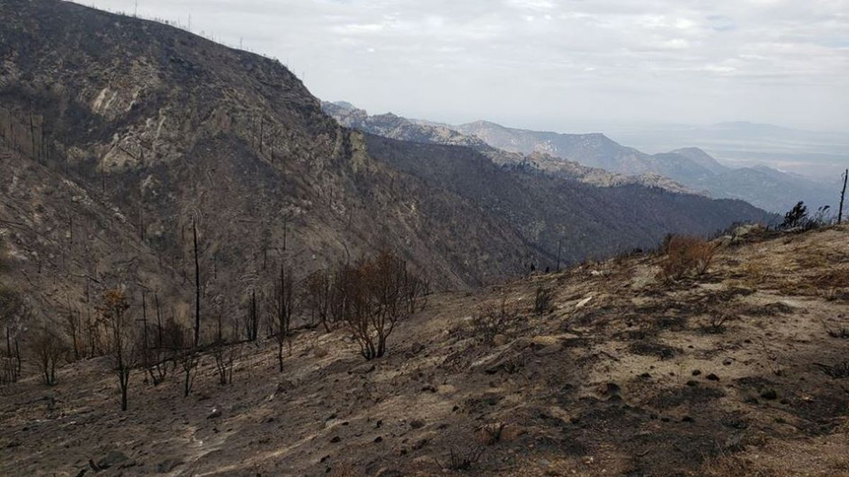 FIRST LOOK: Photos show Bighorn Fire damage on Mount Lemmon