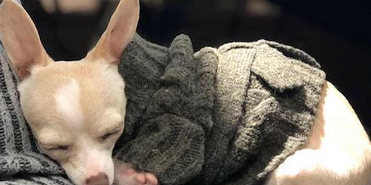 PACC reminding that freezing temps are dangerous for animals not used to the cold
