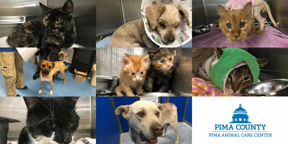 Pima Animal Care Center clinic in need of fosters