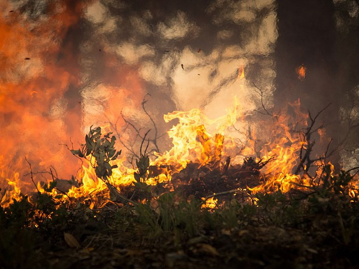 Why prescribed burns are so important to Southern Arizona