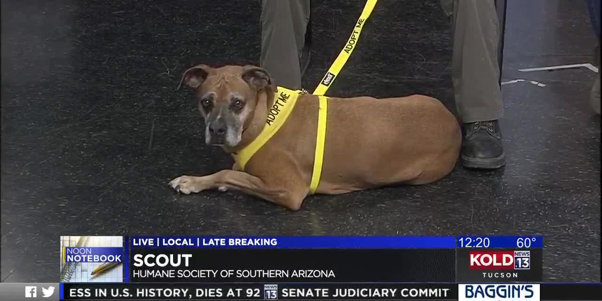 KOLD Noon Notebook: Adopt Scout