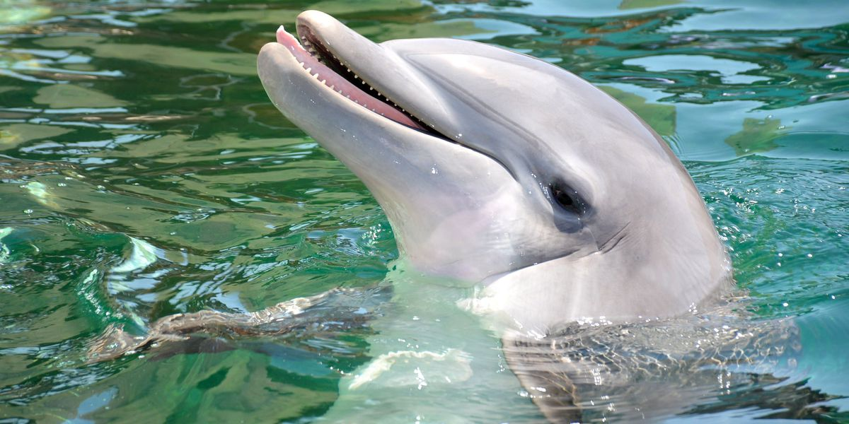 Bottlenose dolphin dies at Dolphinaris facility in Scottsdale