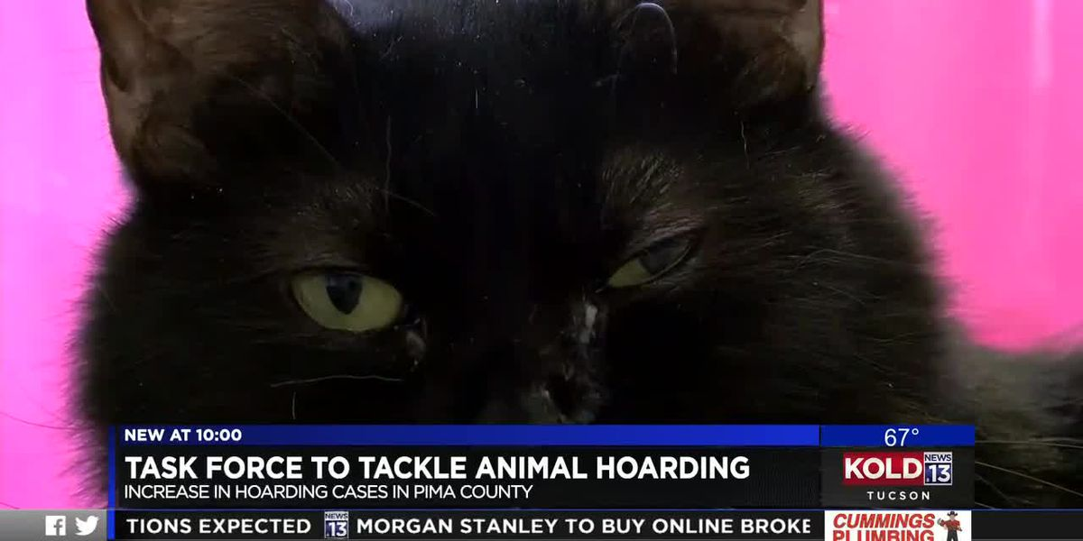 Pima Animal Care Center partners with local groups to address animal hoarding