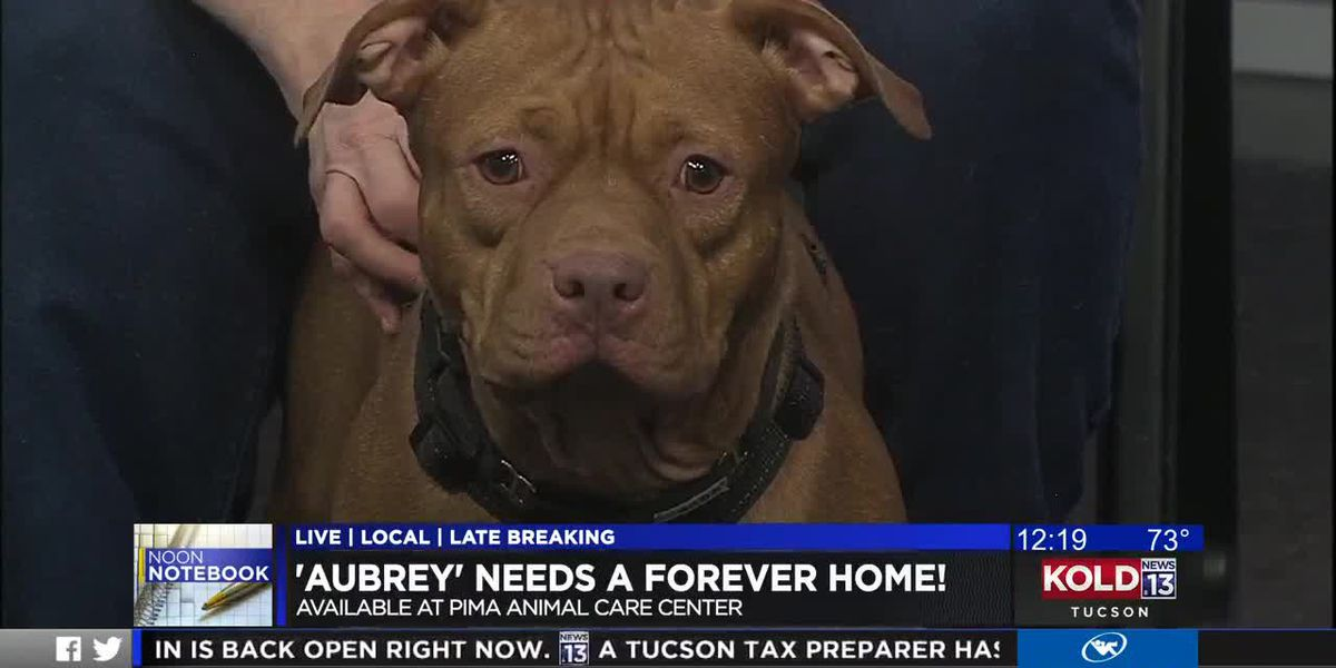KOLD Noon Notebook: Adopt Aubrey