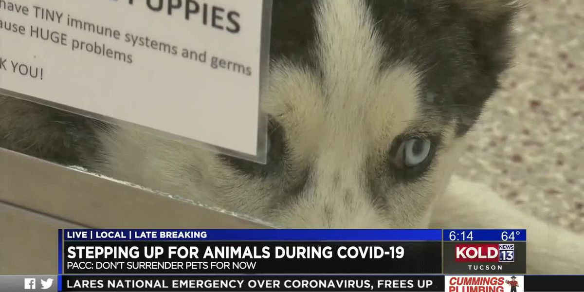 Pima Animal Care Center sees decline in adoptions amid COVID-19 concerns